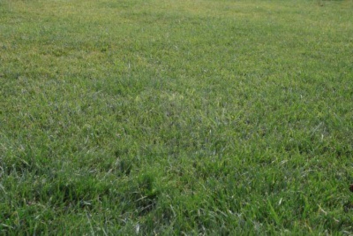 Comment entretenir une pelouse ?